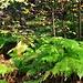 Schon wenig oberhalb Arinsals und noch vor der Grenze zum Nationalpark wandert man durch ein sehr schönes Waldstück.