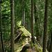 Waldgrat zwischen Mittagplatte und Schiterberg
