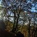 Scareno woodland