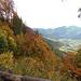 Vollherbst auf dem Weg hinunter nach Schiers. Teils der Strasse lang, teils durch den herrlichen Herbstwald.
