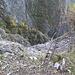 Frana nei pressi della Bocchetta di Lavattel: zona inferiore