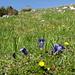 Blumenpracht auf dem Alp Sigel