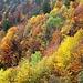 Herbstfarben im Aufstieg nach Eggendössli