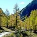 Durch lichte Lärchenwälder geht´s weiter.
