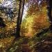 nello splendido bosco