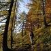 bellissimi  colori d'autunno