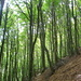 endlos dem Hang entlang durch den frisch-grünen Buchenwald