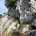 Diese Stelle ist mit einem Drahtseil gesichert. Die Felsplatte am Ende der Querung kann mit einem Spreizschritt überwunden werden. Gute Griffe und Tritte sind vorhanden.