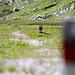 Spiel mit der Blende: spezielle Wegmarkierungen bei Plaun Segnas Sut.