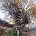alberi contorti
