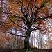 .L'intero albero fedele alle sue radici
