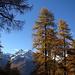Das liebt der Fotograf: Goldgelbe Lärchen stechen vor schneebedeckten Bergen in den tiefblauen Unterengadiner Himmel,