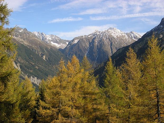 Blick beim Aufstieg durch schönen Lärchenwald zu den Bergen über Gries.