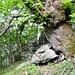 Alter Kastanienbaum am Wegrand