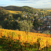 """Weinberge rund um Heppenheim, durch die der """"Bergsträßer Weinlagen-Wanderweg"""" verläuft"""