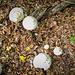 Im Wald sahen wir viele Pilze