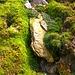 Irisch Moos... ;-)