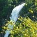 Foroglio - Wasserfall mit blühendem Ginster