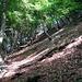 Lichter Wald bei Perostabbio