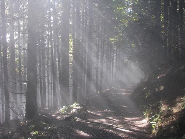 Nebelstimmung am Normalweg