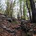 im Kastanienwald, der Weg etwas ruppiger, der Untergrund feucht und rutschig