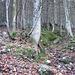 ..... führt unschwierig durch ziemlich steilen Wald bergab.