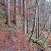 Auf in den Wald...