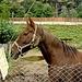 In Chiggiogna hat es sogar zwei Pferde...