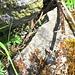 Kreuzotter: Die wunderschöne, kleine Giftschlange verzieht sich elegant in ein Felsloch