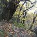 <br />Blätter, Steine, Bäume und andere Pflanzen