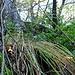 <br />Also weiter - nach oben.<br /><br /><br />♫♬♩...Into The Wild...♫♬♩<br /><br />(Bonaparte)<br />[http://www.youtube.com/watch?v=KSOZ9f9hc6U]