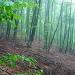 Regen- und Nebelstimmung im Wald unterhalb Termine.
