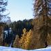 Aufstieg durch den wunderschön verfärbten Lärchenwald. Im Hintergrund beeindruckt der [peak96 Alpstein] mit seiner Westwand