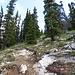 Eine Weile später verlässt man den breiten Trail und gelangt in's eigentliche Aufstiegsgelände. Es gibt einen kleinen Pfad, der sich aber immer wieder mal verliert.