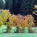 Der Herbst in vollen Farben
