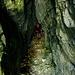 Im vielbesungenen Mürlenloch, ein 20m langer, höhlenartiger Durchschlupf.