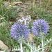 papillon et végétation méridionale