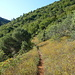 ça sent le Sud : Garrigue , cigales et parfum d'herbes de provence