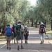 Menton , le parc à oliviers