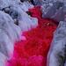 Die purpurnen Flüsse II