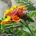 hübsche Blüte