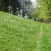 Blühende Wiesen. Schönheiten des Jura