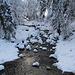 Winterwald im Eigenthal