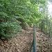 Ein Stückerl am Zaun entlang. Rechts sind schon die steilen Wände des alten Steinbruchs.