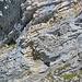Weniger gut sichtbar ein Schwarm Dohlen vor den Felswänden.