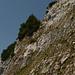 Hier gehts hinauf! Die Platte unterhalb der Tanne ist solid, Kletterei im II. Grad.