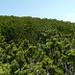 """... oh du grüne Neune... Titelbild der """"Legföhren Revue"""" Mai 2009<br />Auf dem Gulmen Gipfelplaetau"""