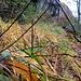 """<br />Nel """"Giardino Incantato"""" di Chiggiogna<br /><br />Im """"Verzauberten Garten"""" von Chiggiogna<br /><br />♩♬♫...Dietro Ogni Blasfemo C'è Un Giardino Incantato...♫♬♩<br /><br />(Fabrizio De André)<br />[http://www.youtube.com/watch?v=vu-Xq8wDtfI]<br /><br /><br />"""
