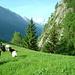 Alp Teli