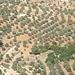 eine der vielen Olivenplantagen im Norden Jordaniens